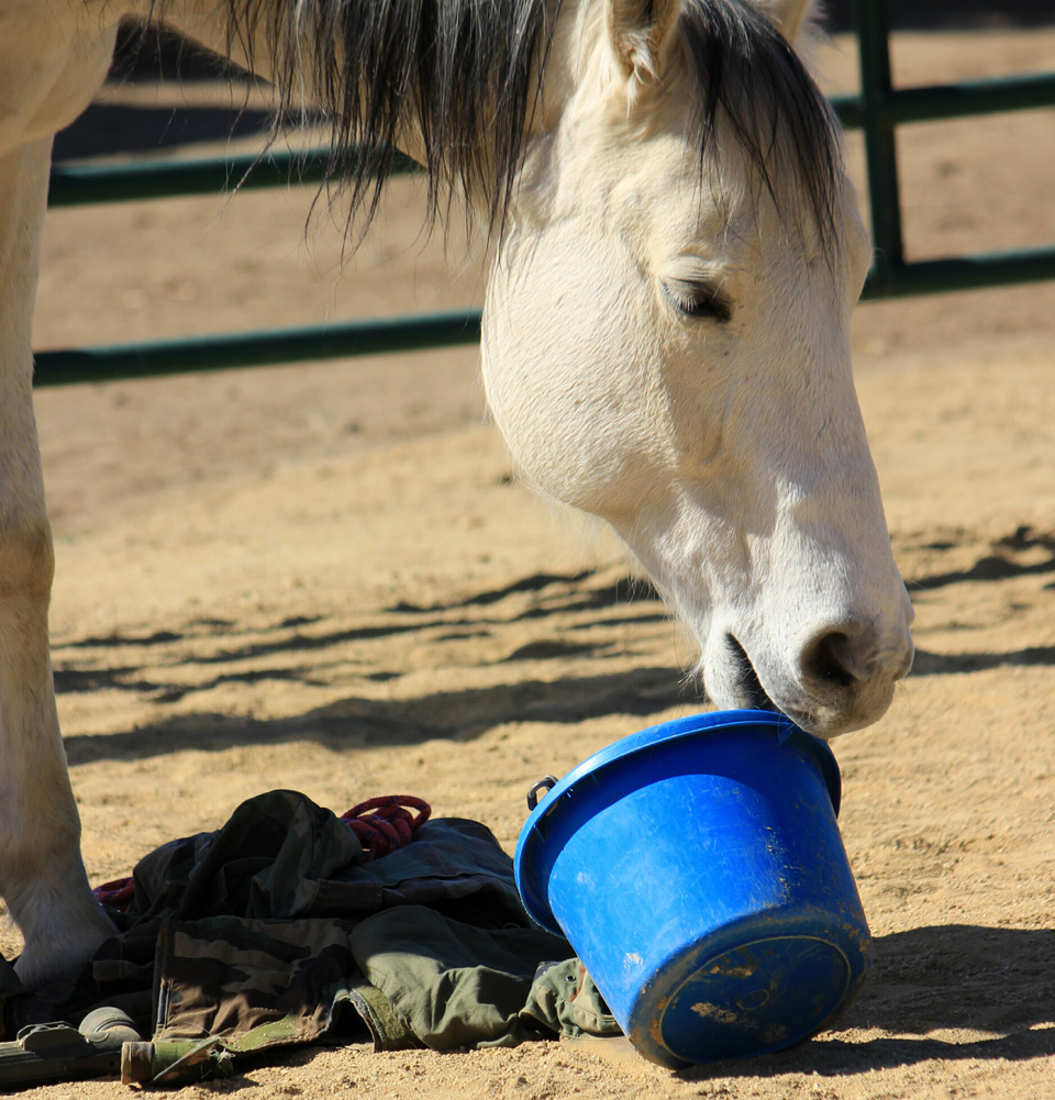 EQUINE ASSISTED THERAPY CALIFORNIA