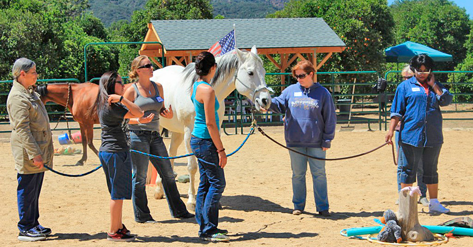 reins-of-hope-equine-assisted-learning