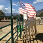 Reins of Hope Equine Assisted Therapy