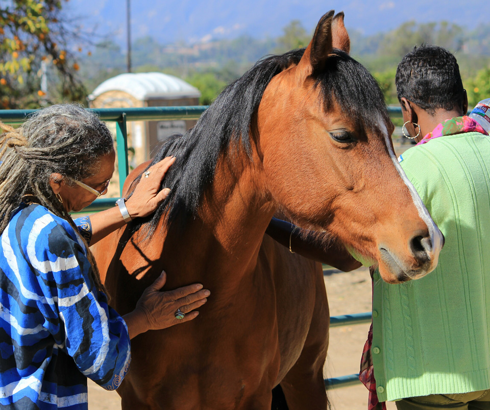 reins of hope ojai california